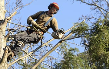 hiring experienced South Yorkshire tree surgeons
