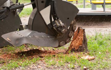 professional South Yorkshire stump grinding services