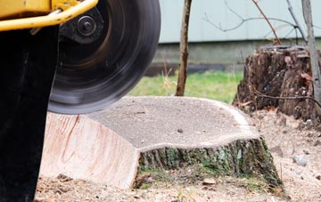 tree stump grinding South Yorkshire