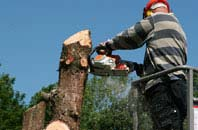 South Yorkshire felling services